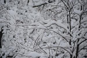 エープリルフールの雪.JPG