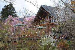 4.17野乃花の庭から6.JPG