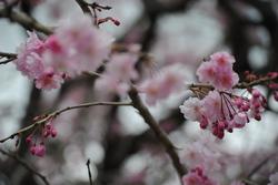 4.17野乃花の庭から5.JPG