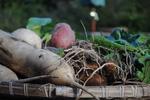 収穫野菜1i.jpg
