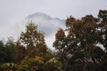 霧の由布岳1.jpg